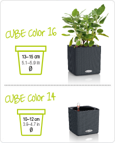 CUBE Color tailles