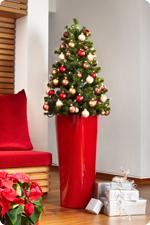 Arbre de Noël en bacs LECHUZA