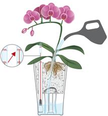 Arrosage d'orchidées en LECHUZA