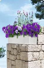 Fleurs de balcon en LECHUZA BALCONERA